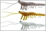 Savage Gear 3D Shrimp