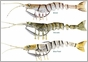 Savage Gear MS-65 TPE Manic Shrimp 2-1/2in 3/25oz