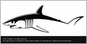 Steelfin Mako Decal Small