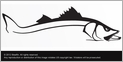 Steelfin Snook Decals