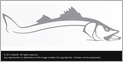 Steelfin Snook Decals Small