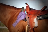 How to position the saddle on your horse: Proper Placement