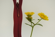 "23"" Maroon Invisible Zipper"