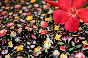 Stretch Cotton Prints Fabric Black Marigold Pink Floral 29 yards