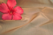 Super Quality Taupe Silk Taffeta Fabric 27 yards