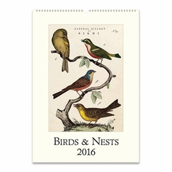 Cavallini Papers 2016 Wall Calendar - Birds & Nests (13 x 19)