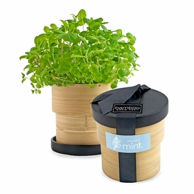 Potting Shed Creations Bamboo Grow Pots in Heirloom Mint