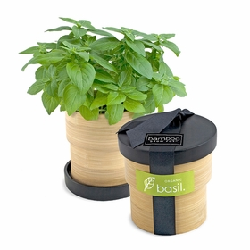 Potting Shed Creations Bamboo Grow Pots in Basil