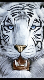 White Tiger Face Beach/Bath Towel