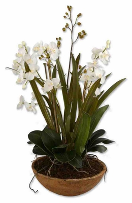 60039 Moth Orchid Planter: Reflects Your Decor And Gardening Craze Brand Uttermost