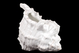 Attractive & Elegant Ceramic Seashell Decorative Piece in White