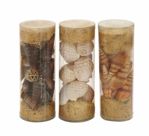 Beautiful Styled Sea Shells 3 Assorted by Woodland Import