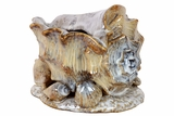 Beautifully Sculpted Magnificent Ceramic Sea Shell Finished in Brown Tone