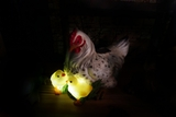 Chicken and 2 Chicks with Solar Light by Alpine Corp