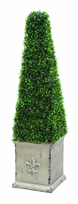 "Classic 37"" Classic Pyramid Shaped Boxwood Brand Woodland"