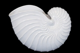 Elegant & Skillfully Sculpted Ceramic Shell Showpiece in White
