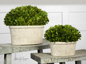 Evergreen Planter - Preserved Boxwood Plant In A Terracotta Pot Brand Uttermost
