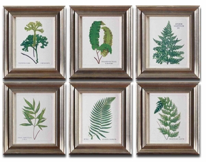 Ferns Framed Art with Brown And Black Wash - Set of 6 Brand Uttermost