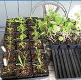 Fertilizers seeds & Heat Mats
