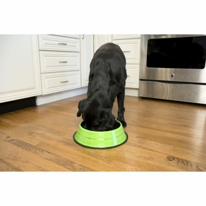 Iconic Pet - Color Splash Stripe Non-Skid Pet Bowl - 64 oz - Green