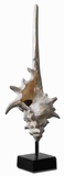 Large Conch Shell Sculpture With Black Matte Stand Brand Uttermost