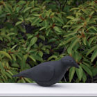 Lazy Hill Farm Designs Black Crow Bird Finial by Lazy Hill Farm Designs