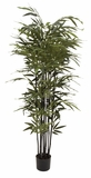 """Natural Polyethylene Potted BK Bamboo Tree 27""""W 70""""H"""