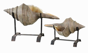 Naturla Conch Shell Sculpture Set On Black Matte Stands Brand Uttermost