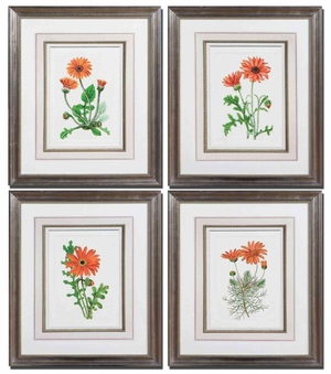 Orange Flowers Art with Brown and Black Wash - Set of 4 Brand Uttermost