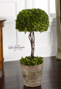 Preserved Boxwood Tree Topiary A Nature Decor With Difference Brand Uttermost
