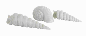 Shell Decor Glazed in White Color with Fine Detailing (Set of 3) Brand Woodland