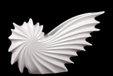 Stylish & Contemporary Ceramic Nautilus Seashell White