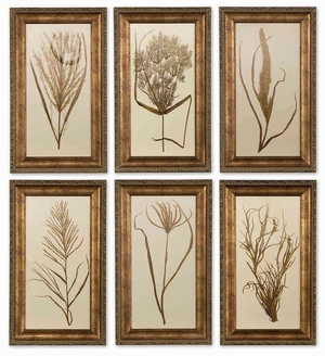 Wheat Grass Framed with Botanical Art - Set of 6 Brand Uttermost