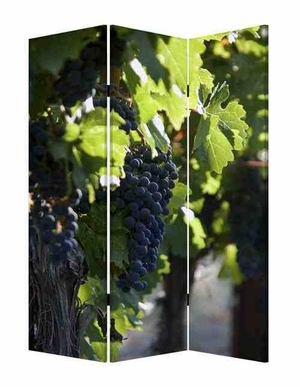 Wine Country Screen, 3 Panel Canvas Screen, 48 Inch L X 72 Inch H Brand Screen Gems
