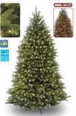 7 �' Forrest Fir Prelit Tree (700 Dual Color <b>LED</b> Lights)