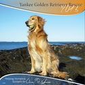 New! Exclusive - 2015 YGRR Golden Retriever Calendar