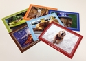 Exclusive YGRR Assorted Cards