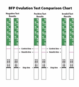 BFP Test Strip Little Bundle