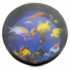 12� Remo Ocean Drum with Pics of Fishes