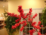 Red Ilex Berries
