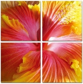 "VIG Furniture VGSC-SC-9637ABCD Hibiscus - 24"" x 24"" Photo on Canvas"