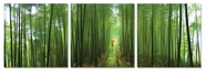 "VIG Furniture VGSC-SH-7441ABC Forest - 24"" x 24"" Photo on Canvas"