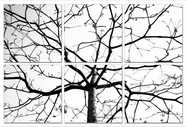 "VIG Furniture VGSC-SH-7749ABCDEF Winter Branches - 24"" x 24"" Photo on Canvas"