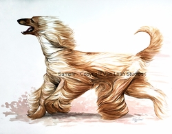 "Afghan Hound ""Wind Runner""  Limited Edition Print"