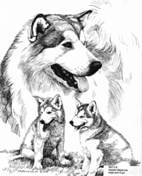"Alaskan Malamute ""Pups and Head Study"" Limited Edition Print"