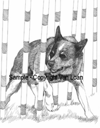 "Australian Cattle Dog ""Agility"" Limited Edition Print"