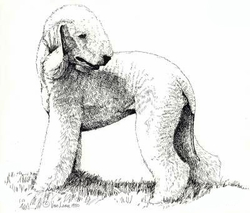 "Bedlington Terrier ""Standing""  Limited Edition Print"