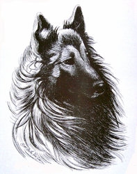 "Belgian Tervuren ""Windy Day""  Limited Edition Print"
