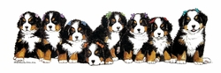 "Bernese Mountain Dogs ""Puppies and Bows"""