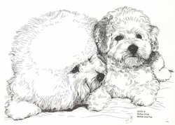 "Bichon Frise  ""Mom and Pup"""